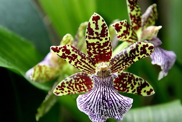 10 Orchid