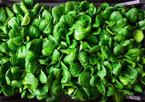 what to grow in november young spinach leaves in a box