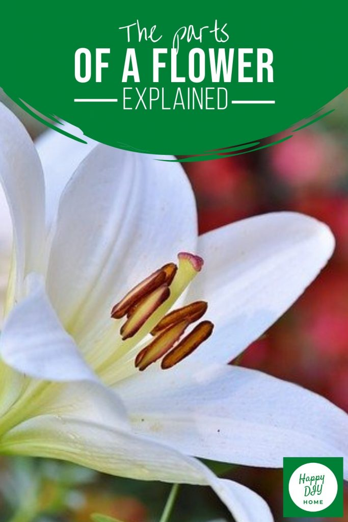 18. the parts of a flower explained image 2