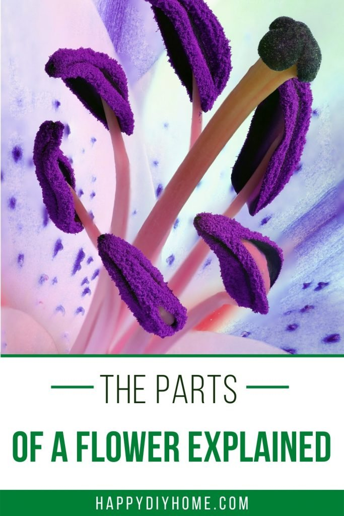 17. The parts of a flower explained image 1