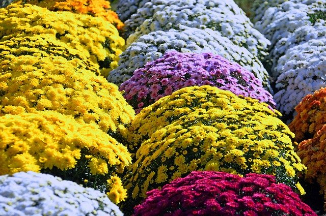 1 Colorful fall flowers